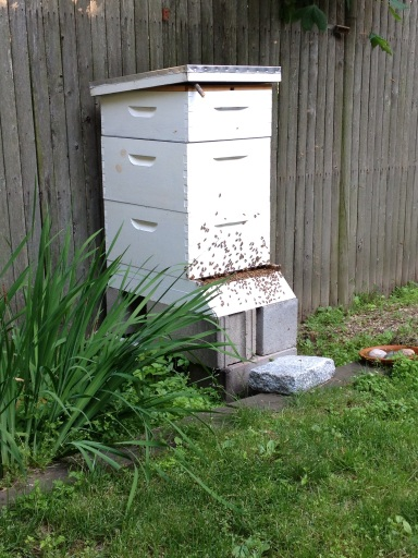 Bee Hive after the swarm.