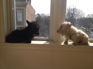 Dogs in the window